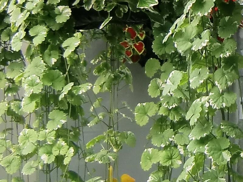 Types de plantes serres louise turcotte for Type de plante